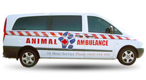 Animal Ambulance Gold Coast